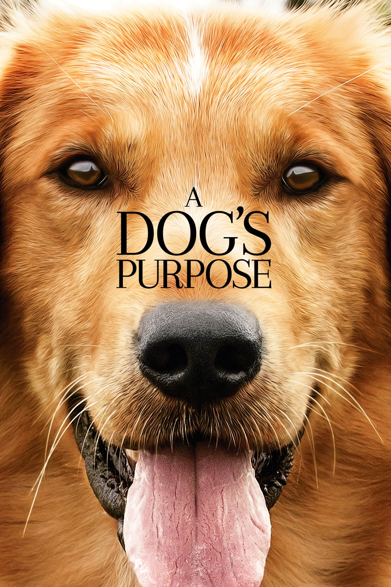 A Dogs Purpose (Can Dostum)